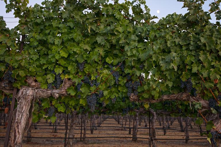 grapes 20 blog